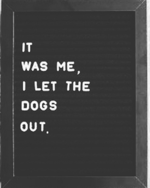 It was me. I let the dogs out. #wholetthedogsout #itwasme #noregrets #lifeisshort